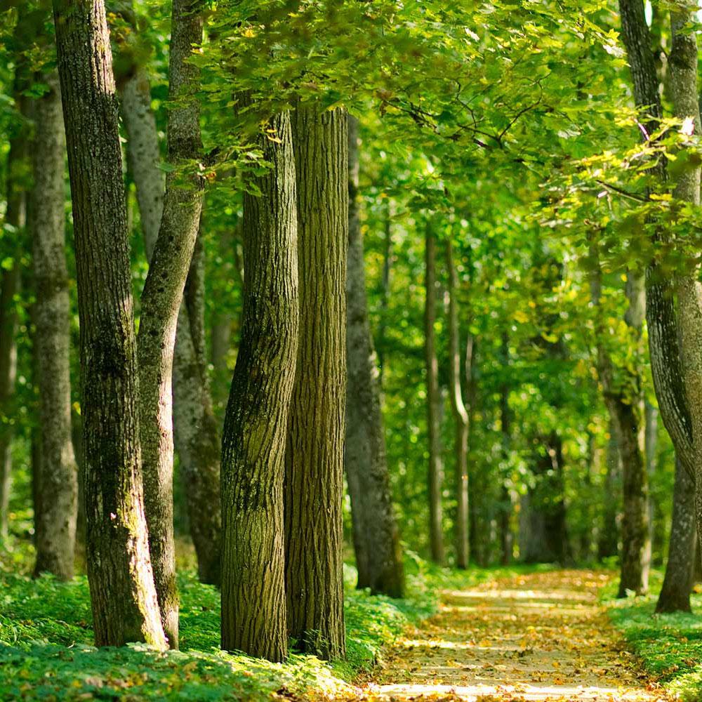 Vi passer på vores skove